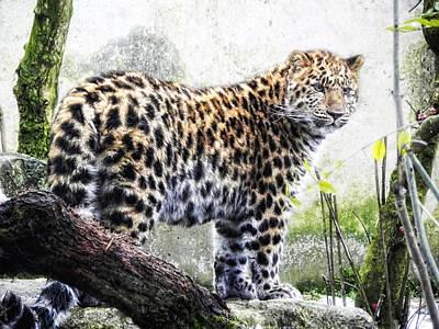 Leopard Cat Photograph - panthera III by Joachim G Pinkawa