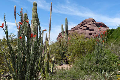 Photograph - Papago Butte by Cindy McDaniel