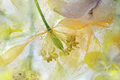 Floral Abstract Photograph - Papaver Ice by Mandy Disher