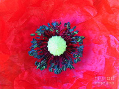 Photograph - Papaver's Eye by Agnieszka Ledwon