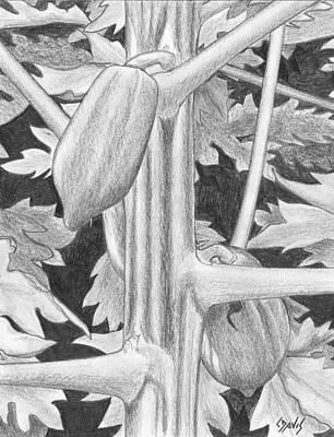 Papaya Art Print by Lew Davis