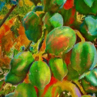 Painting - Papayas Getting Ripe - Square by Lyn Voytershark