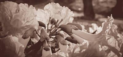 Paper Flowers - Sepia  Art Print