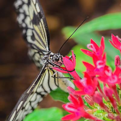 Photograph - Paper Kite Butterfly On Flower by Tamara Becker