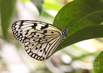 Art Print featuring the photograph Paper Kite On A Leaf by Ruth Jolly