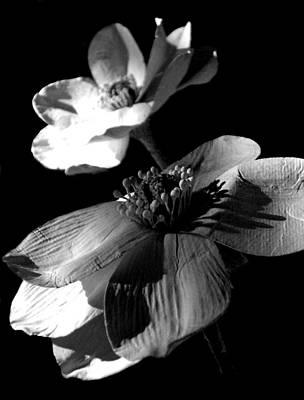Photograph - Paper Petals by Hannah Taylor