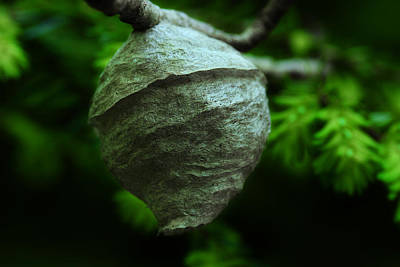 Photograph - Paper Wasp Nest by Michael Eingle