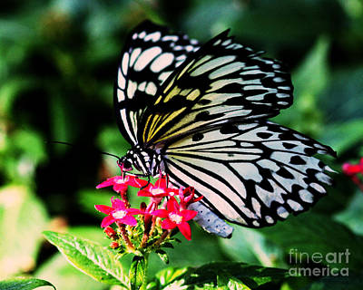 Paper White Butterfly Art Print