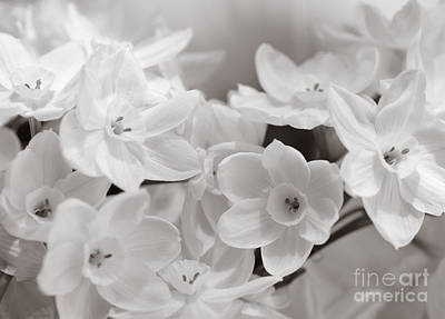 Photograph - Paper Whites Bouquet by Tamara Becker
