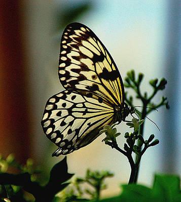Paperkite Butterfly Art Print