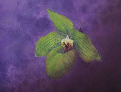 Painting - Paphiopedilum Norito Hasegawa by Robin Street-Morris