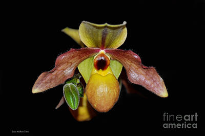 Photograph - Paphiopedilum 'summer Ice' Orchid by Susan Wiedmann