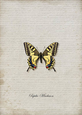 Papilio Machaon Butterfly Art Print by Lee Craggs