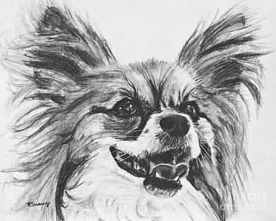 Drawing - Papillon Dog Drawing by Kate Sumners