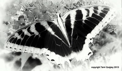 Photograph - Papillon Dream by Tami Quigley