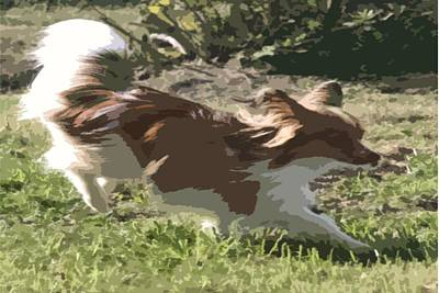 Photograph - Papillon In Flight by Donna G Smith
