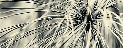 Photograph - Papyrus by Ulrich Schade