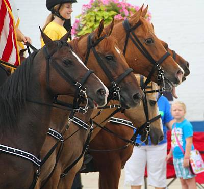 Horse Ears Photograph - Parade Horses by Dan Sproul