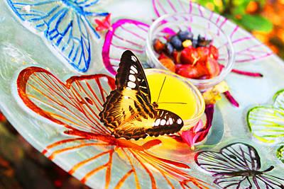 Parthenos Sylvia Philippensis Photograph - Paradise Honeydew by Iryna Goodall