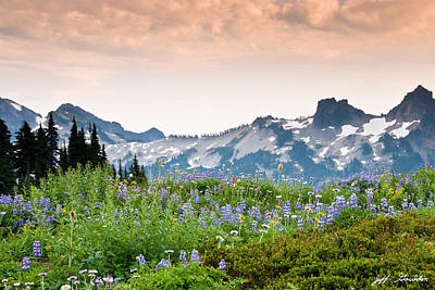 Paradise Meadows And The Tatoosh Range Art Print