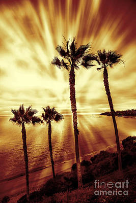 Photograph - Paradise On The Beach by Linda MatlowFour Palm trees red gold sunset on beach light rays