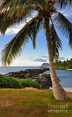 Photograph - Paradise Palm by Gina Savage