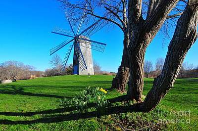 Boyd Photograph - Paradise Park Windmill by Catherine Reusch Daley