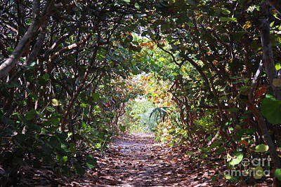 Photograph - Paradise Tunnel by George Mount
