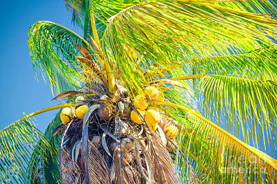 Photograph - Paradiso Tropicale - And The Sky Sings by Sharon Mau