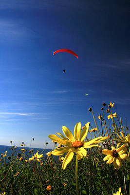 Paraglider  Art Print by Scott Cunningham