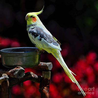 Parakeet Photograph - Parakeet Bird by Peter Dang