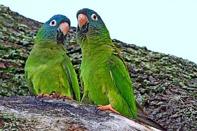 Quaker Parakeet Photograph - Parakeet Pair by Ira Runyan