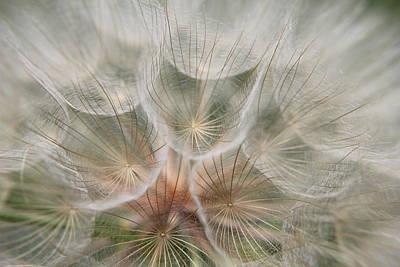 Photograph - Parasol by Trent Mallett