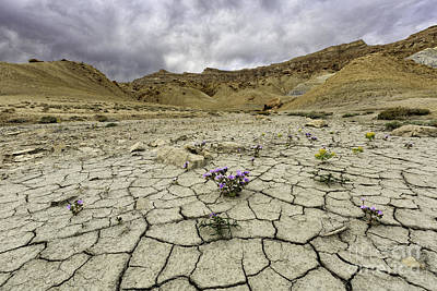 Photograph - Parched Ground by Stuart Gordon