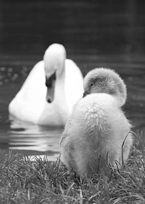 Photograph - Parenthood by Steven Poulton