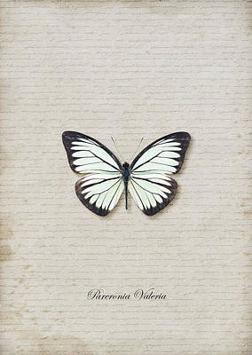 Pareronia Valeria Butterfly Art Print by Lee Craggs