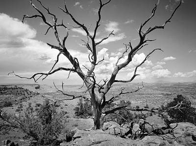 Photograph - Paria Tree Last Stand by Rich Franco