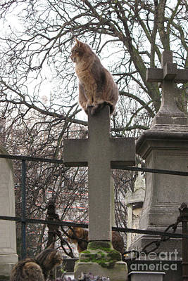 Chatting Photograph - Paris Cemetery Cats - Pere La Chaise Cemetery - Wild Cats On Cross by Kathy Fornal