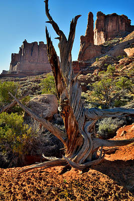 Photograph - Park Avenue Juniper by Ray Mathis