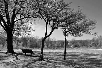 Photograph - Park Bench by Ann Bridges