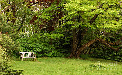 Wall Art - Photograph - Park Bench With Tree Nearby by Susan Montgomery