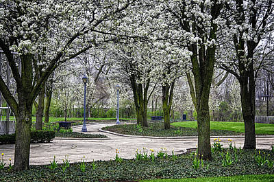 Photograph - Park Blossoms by Gene Sherrill