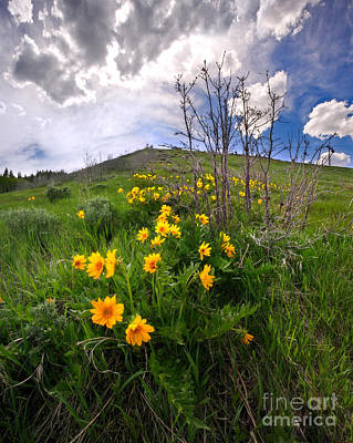 Park City Slopes In Spring Art Print by Matt Tilghman