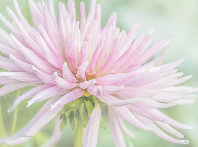 Photograph - Park Princess Collarette Dahlia by Julie Palencia