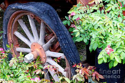 Photograph - Parked In The Garden by Vinnie Oakes