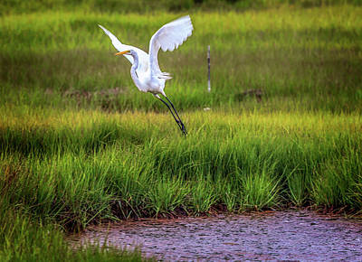Photograph - Parker National Wildlife Refuge by (c) Swapan Jha