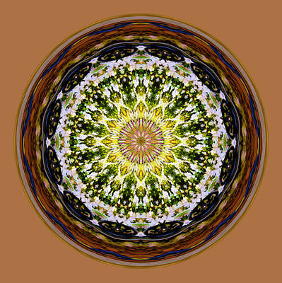 Photograph - Parkside Mandala by Bill Barber