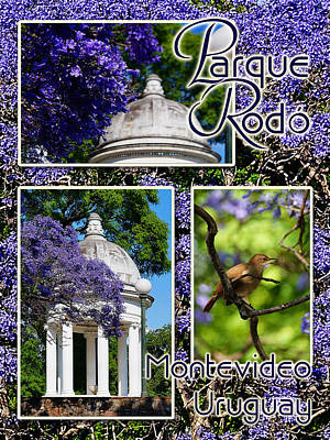 Photograph - Parque Rodo by Blair Wainman