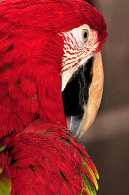 Jerry Sodorff Royalty-Free and Rights-Managed Images - Parrot 13680 by Jerry Sodorff
