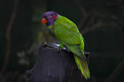 Parrot 3 Art Print